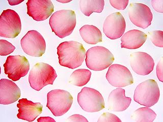 rosepetals2
